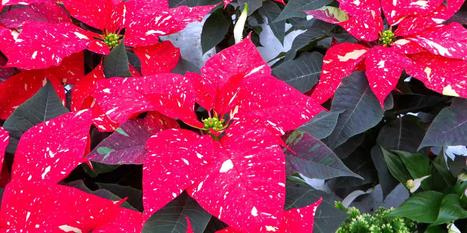 Foto Viveros Ducasse Navidad Donostia San Sebastián
