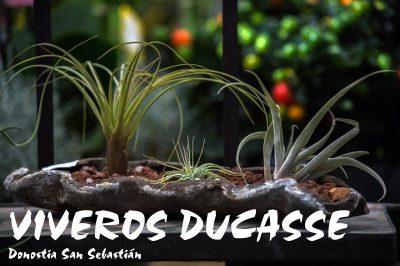 VIVEROS DUCASSE Donostia San Sebastián primavera 2018