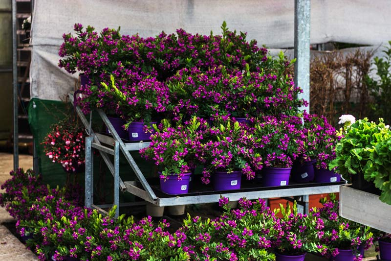 Viveros ducasse donostia san sebasti n plantas flores for Todo para viveros